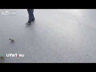 Водитель помог уточкам перейти дорогу